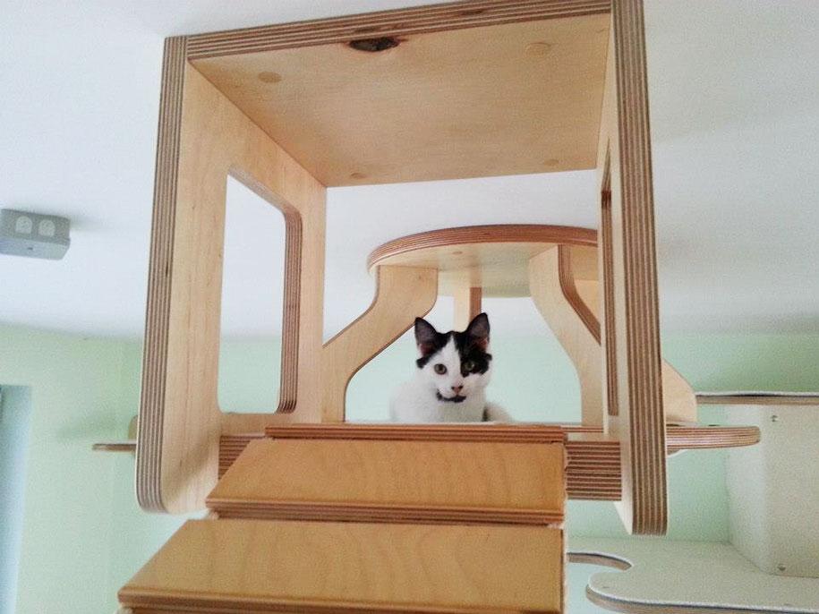 prolézačka pro kočky