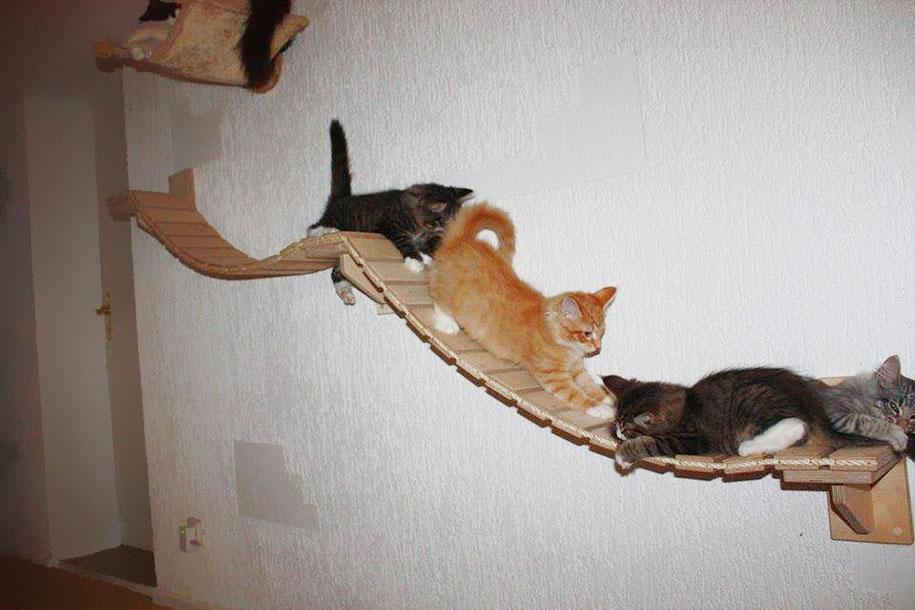 kočky na prolézačce