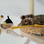 Aby se kočce u vás doma líbilo