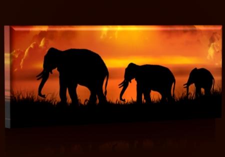 sloni-rodinka-33