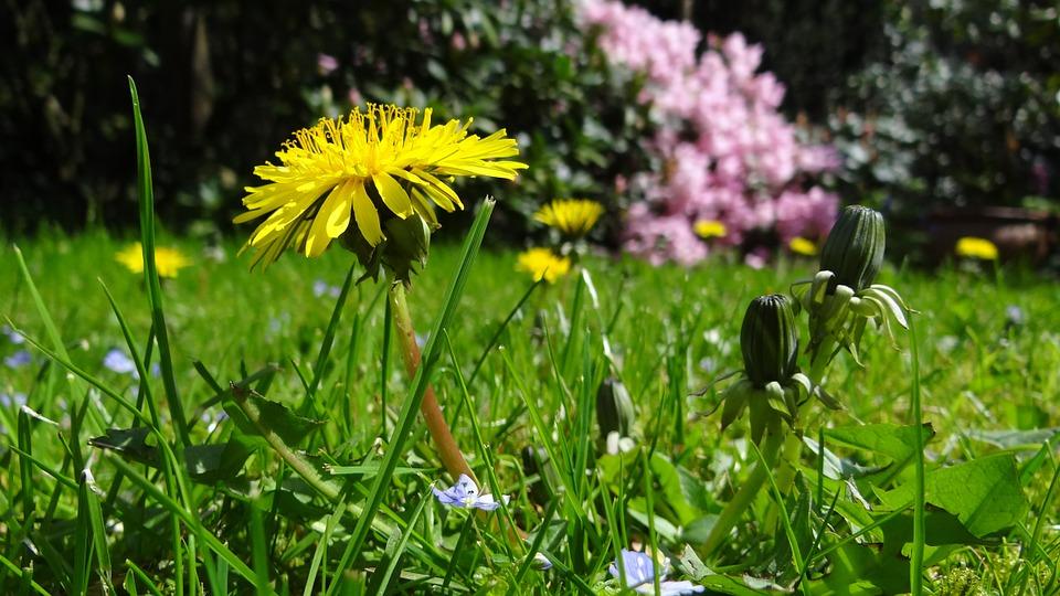 léto na zahradě - zeleň