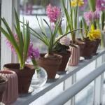 Řešíte vytápění v zimní zahradě? Vyzkoušejte tepelné čerpadlo!
