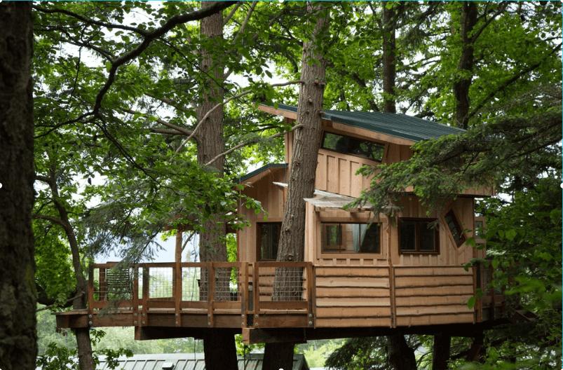6orca-island-tree