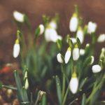 Svatá trojice jarní péče o zahradu: prořez, výsev, ochrana záhonů